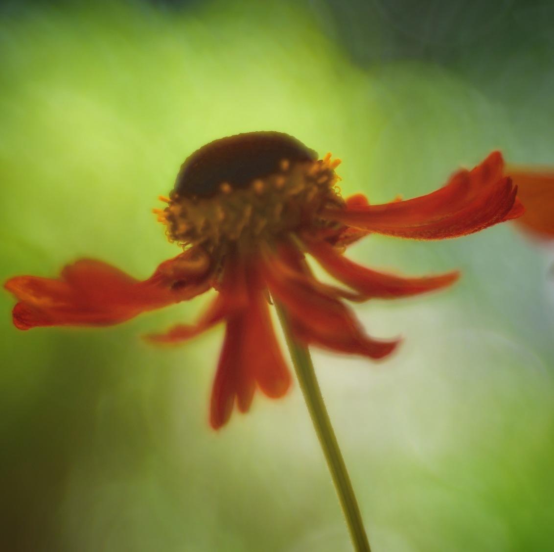 71218906-0056-4A63-A098-5A20671C8EC8 - Echinacea ! - foto door Suzanvdw op 11-07-2018 - deze foto bevat: zone hoed echinacea
