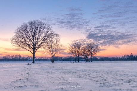 Bomenrij in Bakel na zonsondergang