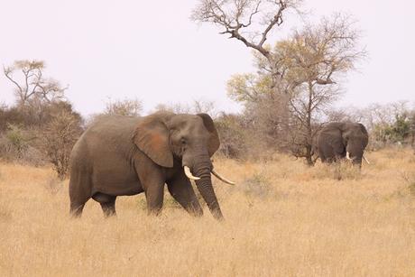 Zuid Afrika 6