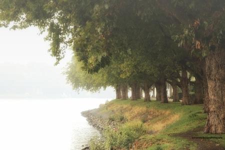bomen 2002 - - - foto door onne1954 op 29-09-2020 - deze foto bevat: water, dijk, natuur, licht, herfst, mist, bomen, rivier