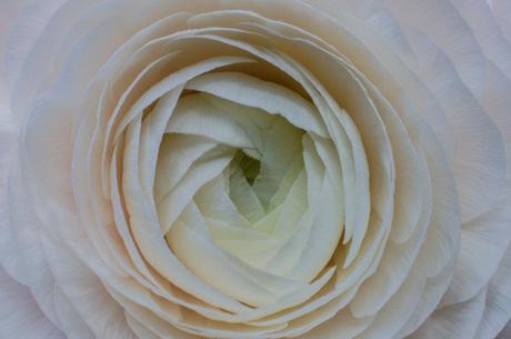 White flower macro shot