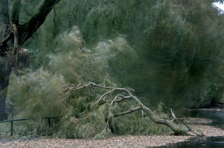 Bomen sneuvelen. - Tijdens de storm gemaakt met een lange sluitertijd. - foto door jolandaout op 28-10-2013 - deze foto bevat: wind, bomen, storm, takken, waaien, afgebroken tak