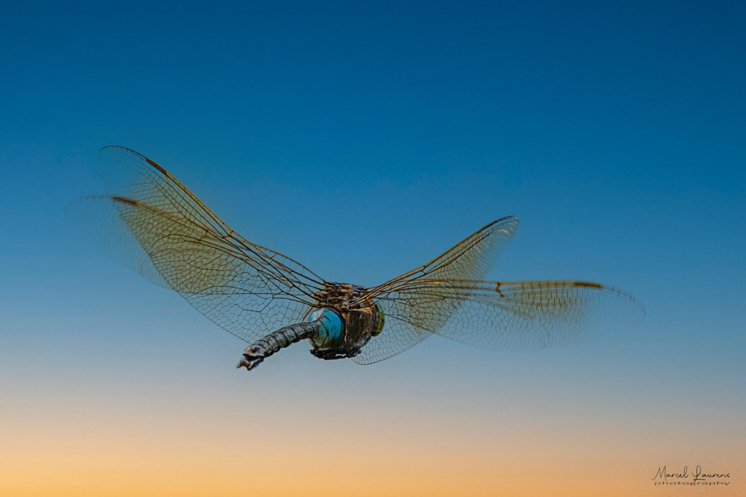 Libelle - Libelle in AWD - foto door Marcel2205 op 12-04-2021 - locatie: AWD - deze foto bevat: libelle, awd, hoofd, lucht, oog, insect, azuur, geleedpotigen, libellen en damseflies, vleugel, elektrisch blauw, ongewervelden