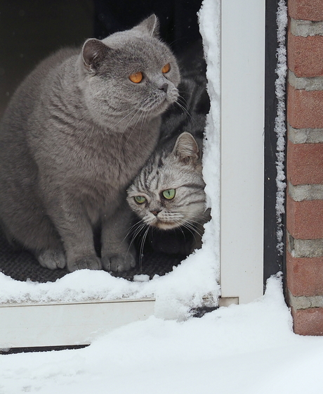 Brrrrr