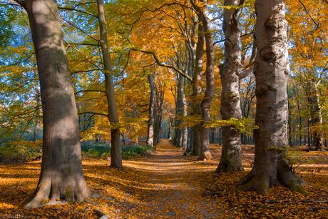 Klassiek herfst