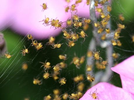 spinnenkroost