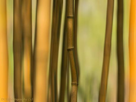 Dancing bamboo