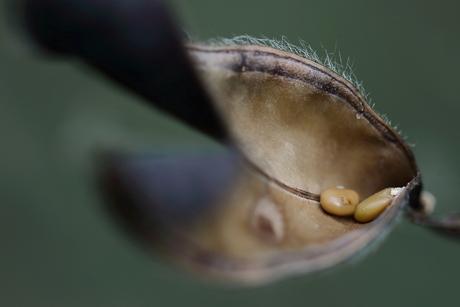mierenbroodjes