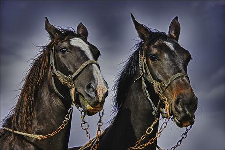 paarden.......................