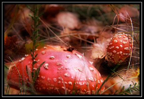Herfst (2in1)
