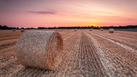 Grainy Sunset