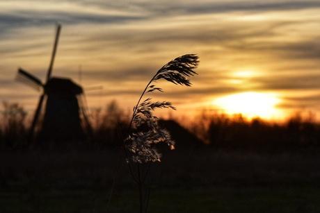Silhouet zonsondergang