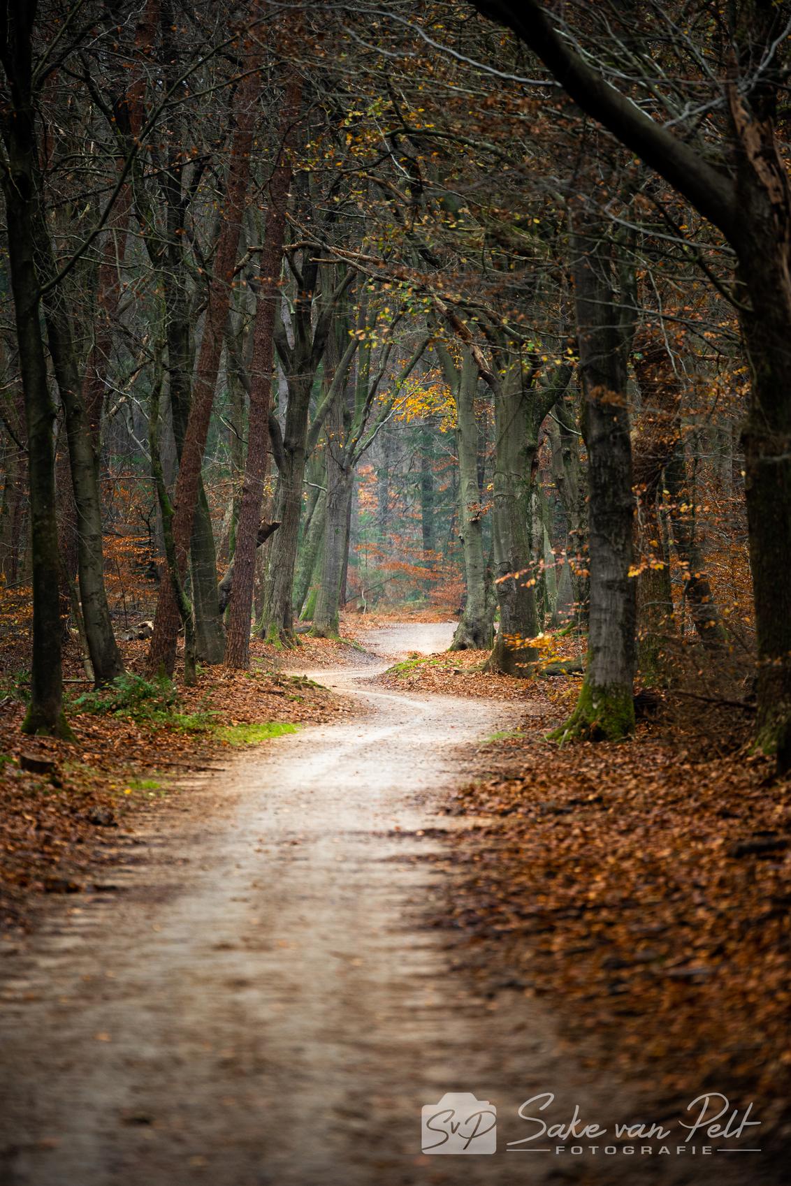 De Weg gaat Recht de Weg gaat Krom - Heerlijk om te zien dat er besloten is om het paadje niet helemaal recht te trekken - foto door Sake-van-Pelt op 01-12-2020 - deze foto bevat: groen, lucht, wolken, zon, boom, bladeren, natuur, geel, licht, herfst, bospad, blad, vakantie, landschap, bos, pad, beukenlaan, beuk, nederland, weg, kaal, laan, speulderbos, bosweg, seizoen, seizoenen, beuken, slingerweg, slingeren