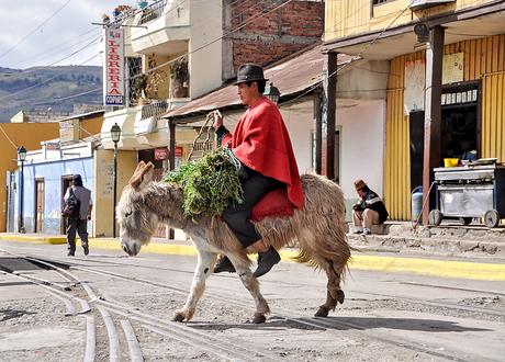 Man op ezeltje in Ecuador