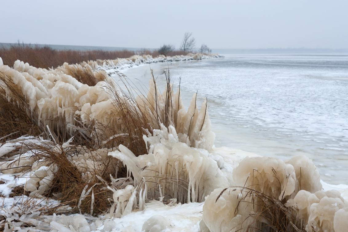 Winter in Lauwersmeer - 15 februari 2021. In het noorden van Friesland was door de storm het water en de vorst, het riet veranderd in ijssculpturen.  bedankt voor alle re - foto door Santakees op 22-02-2021 - deze foto bevat: natuur, sneeuw, winter, ijs, meer, nederland, ijssculpturen, bevroren riet, bantshaven, surfspot lauwersmeer