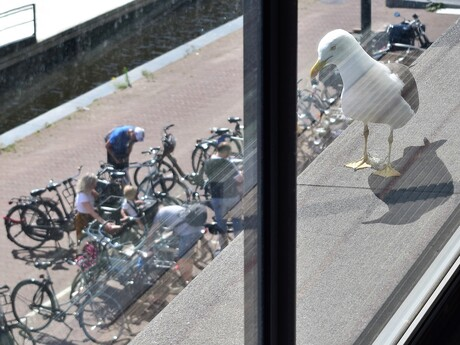 Achter glas voor het balkon