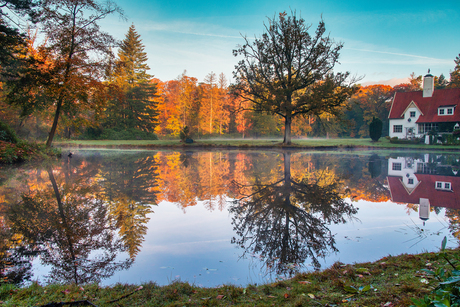 Reflecitie in het Haagse Bos.