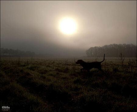 A Gray Ghost - - - foto door SiSu op 30-03-2009 - deze foto bevat: zon, mist, hond, veld, weimaraner, rashond, sisu