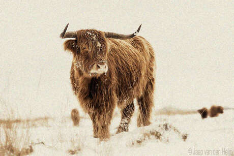 Highlander in Snow III