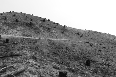 Bomenkerkhof - Een kaal gedeelte tijdens de roet route, hier zijn de verbrande bomen wel gekapt. Ook een triest gezicht. - foto door yvonnevandermeer op 28-03-2013 - deze foto bevat: duinen, schoorl, zwart wit, roet route