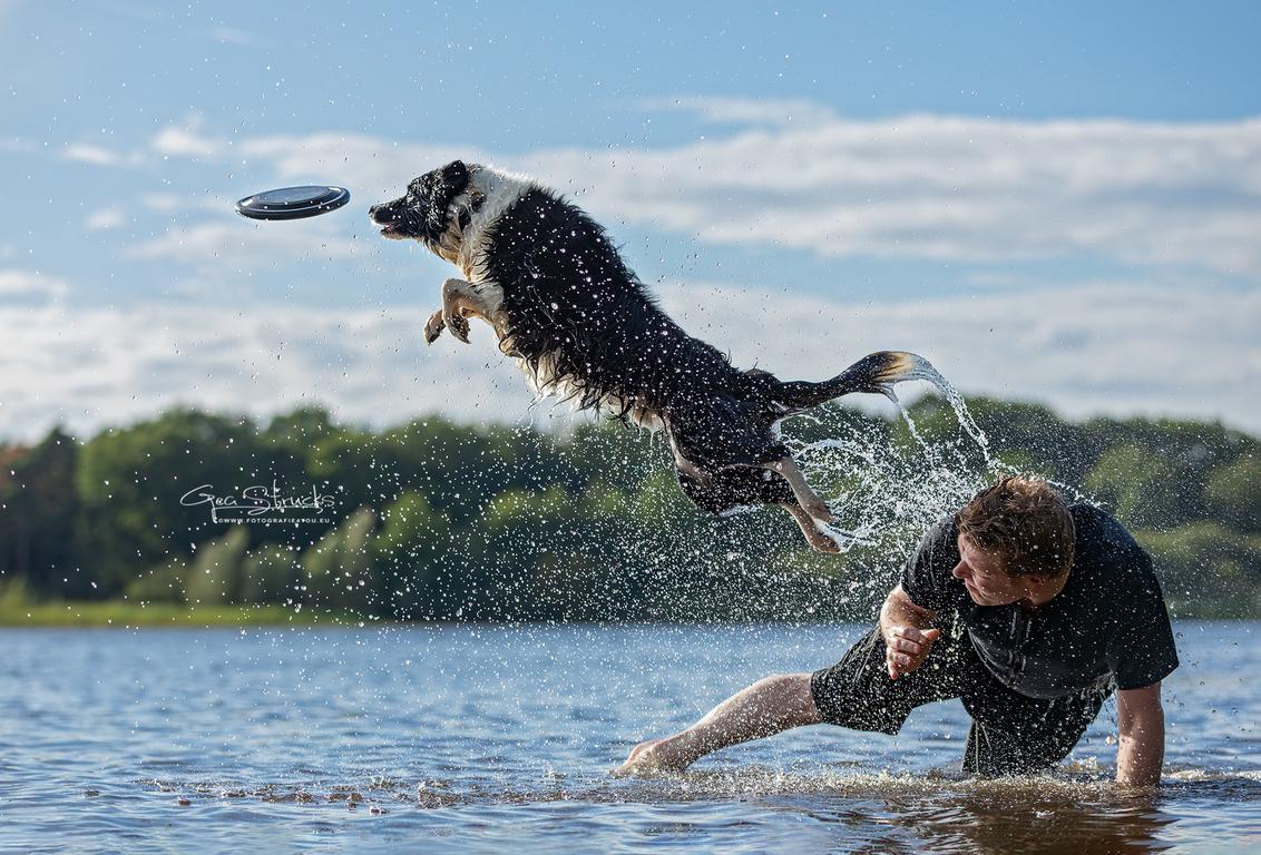 Dorus catch - Tijdens een frisbee fotoshoot, deze prachtige sprong mogen vastleggen. Wat een kracht en souplesse - foto door madcorona op 21-09-2020 - deze foto bevat: honden, sprong, catch, frisbee, hondensport, Border Collie, discdog