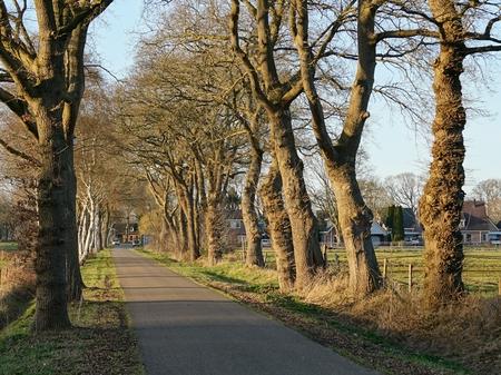Het voorjaar komt in zicht - Dit is een uitsnede van een landweg foto.  - foto door ceesstol op 11-04-2021 - locatie: 7843 Erm, Nederland - deze foto bevat: fabriek, lucht, natuurlijk landschap, boom, weg oppervlak, takje, vegetatie, hout, zonlicht, gras