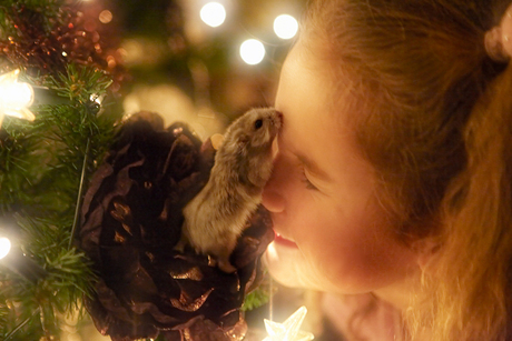 Kissed by a Hamster