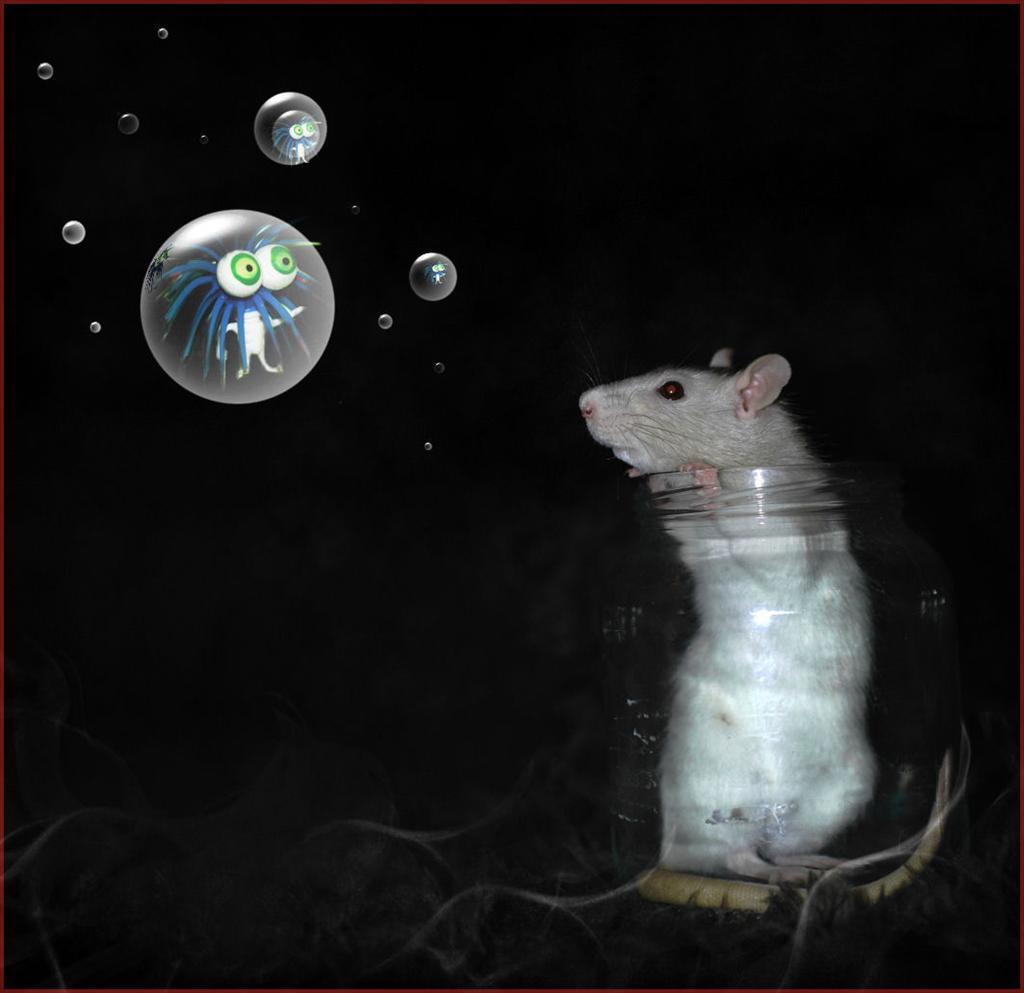 Hello - - - foto door WildIsh op 24-01-2009 - deze foto bevat: bellen, bewerkt, ballen, en, rat, ratje, tamme, wildish, boobie, ritten