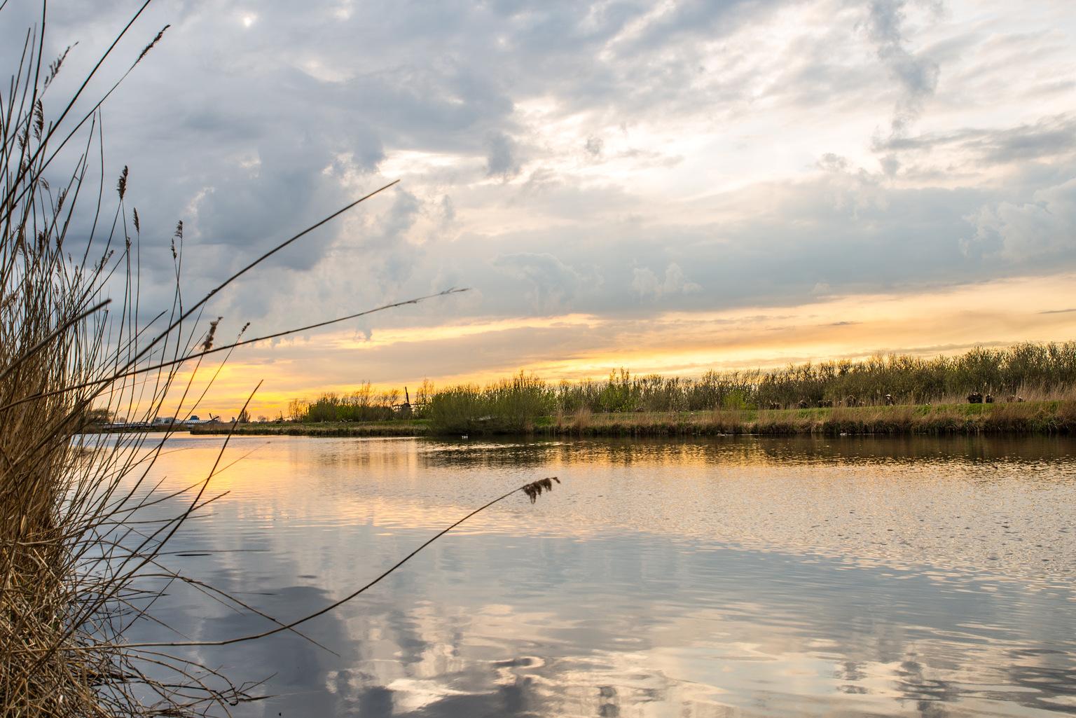 Kinderdijk  - Molens van Kinderdijk  - foto door dwarsie op 11-04-2021 - deze foto bevat: water, lucht, wolk, watervoorraden, gewervelde, natuurlijk landschap, fabriek, meer, waterloop, nagloeien