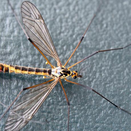 Bug close up
