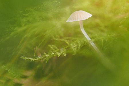 dromerige paddenstoel - - - foto door Lathyrus op 28-10-2015 - deze foto bevat: herfst, paddenstoel, bos, dromerig