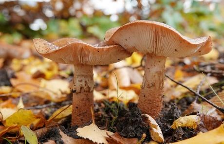 Wouwse paddenstoelen (15)