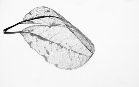 Reflectie van een bladskelet