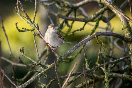 Vogels in de tuin - Huismus - foto door bertus52 op 25-02-2021