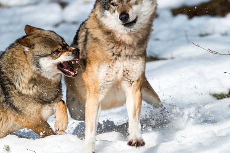 Actie in het Bayerischer Wald