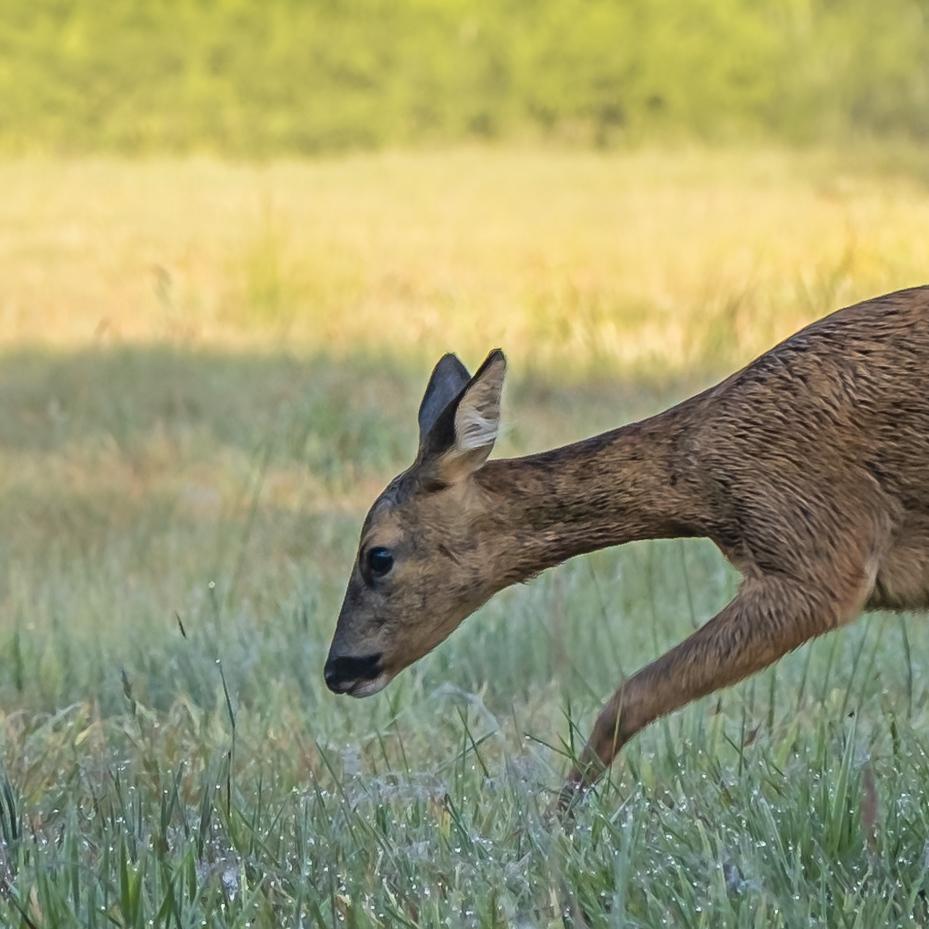 Reegeit - - - foto door Monique49 op 22-08-2020 - deze foto bevat: natuur, dieren, ree, reegeit, bos