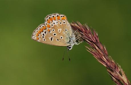 Alweer een vlindertje