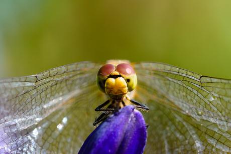 libelle macro