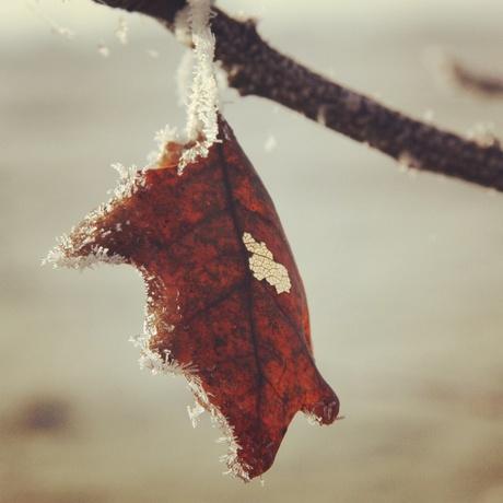 Herfst of winter?