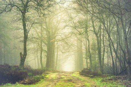Groenig bos