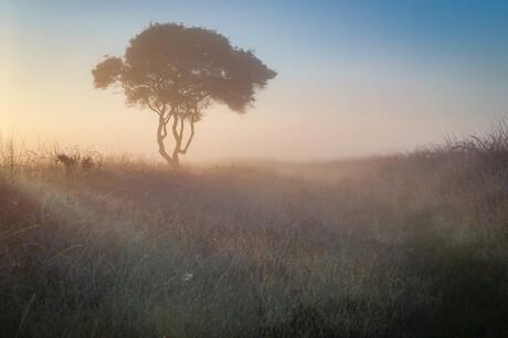 Heide in de mist.