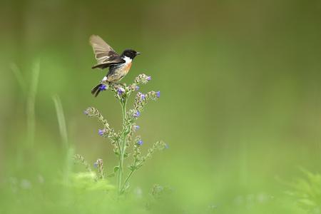 Roodborsttapuit - Dit vogeltje landde wel op een héél mooi plekje... gefotografeerd vanuit de auto langs een ongerepte berm. Ja, ze bestaan nog... ongemaaide bermen. W - foto door guurtje op 03-06-2016 - deze foto bevat: groen, bloem, lente, natuur, licht, blad, dieren, vogel, roodborsttapuit, guurtje
