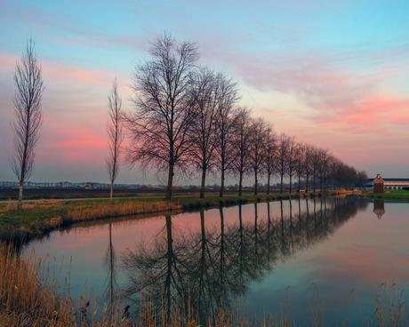 Bomen, kleuren en reflecties