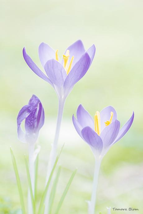 Bijna voorjaar.....