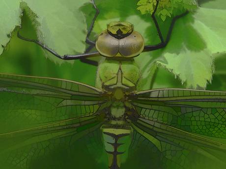 Groene Libelle in waterverf
