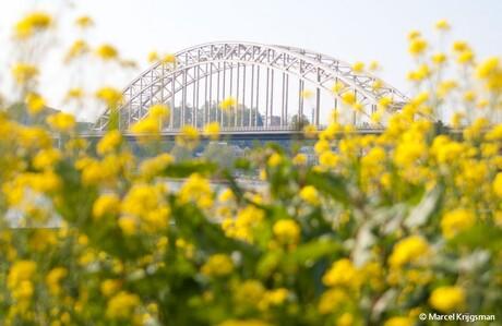 Waalbrug in de lente