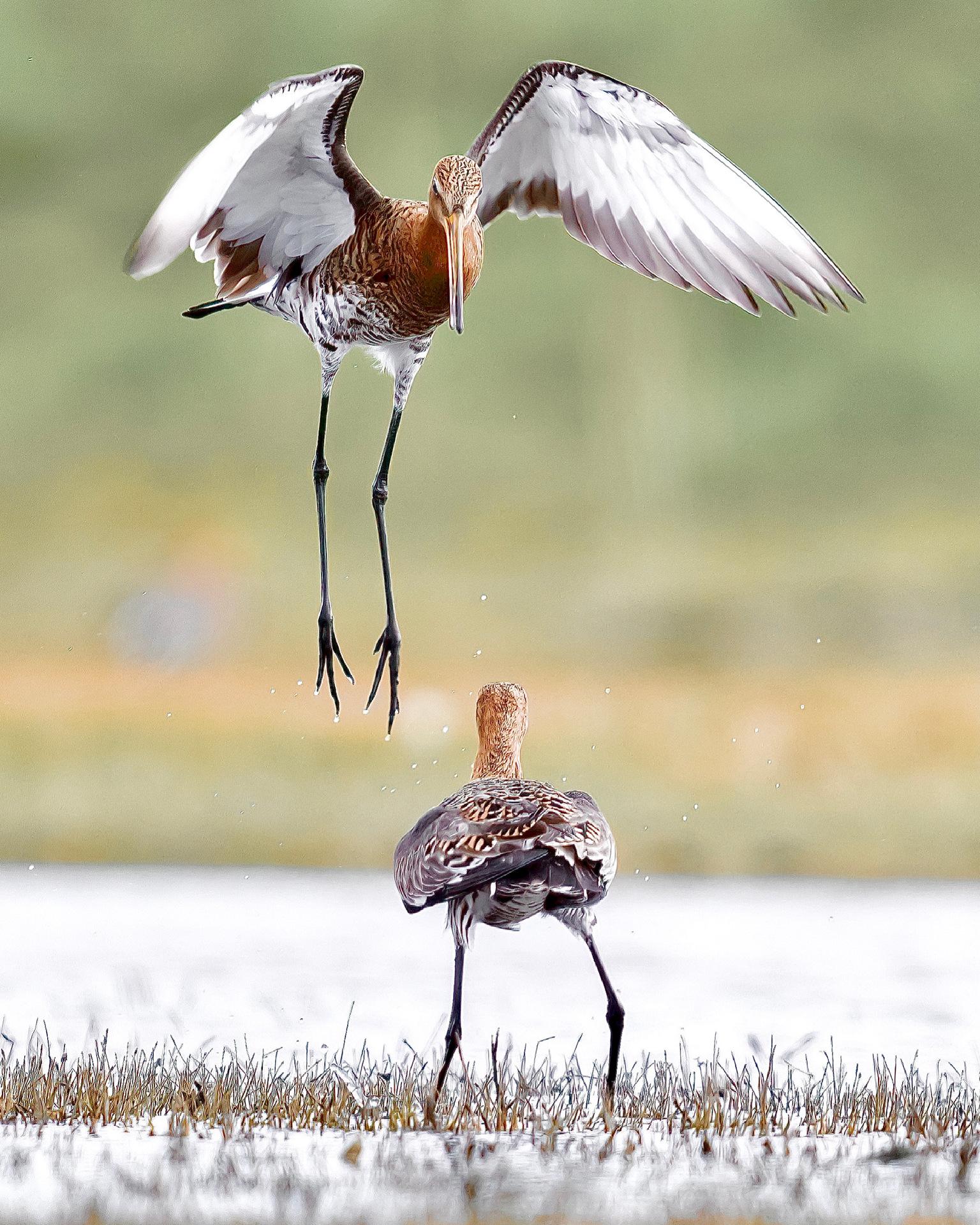 Van bovenaf - Van bovenaf - foto door guidobauhuis op 15-04-2021 - locatie: 1156 Marken, Nederland - deze foto bevat: water, vogel, ecoregio, natuur, vloeistof, vloeistof, lichaam van water, bek, aanpassing, vleugel
