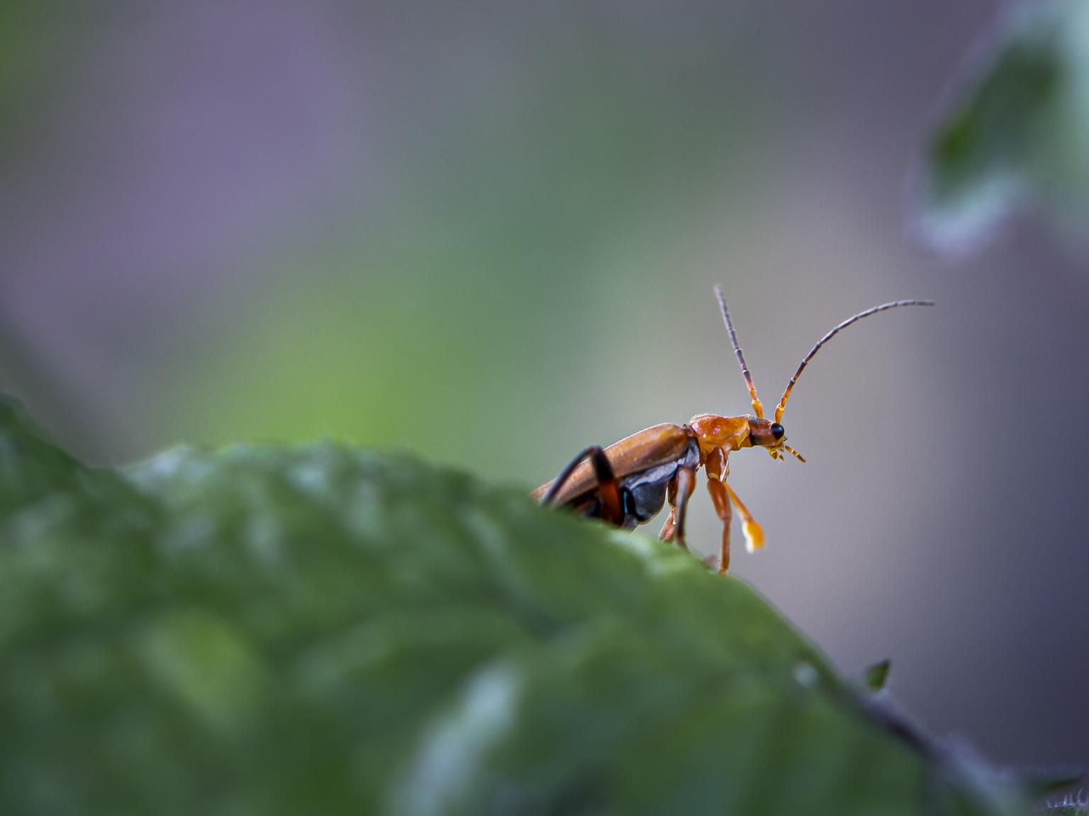 M A C R O - macro in eigen tuin - foto door Lucimage op 12-04-2021 - locatie: België - deze foto bevat: macro, tuin, insecten, geleedpotigen, insect, plaag, terrestrische plant, parasiet, fabriek, membraan-gevleugeld insect, macrofotografie, ongewervelden, dieren in het wild