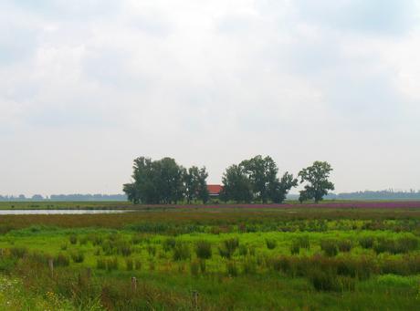 Boerderij in het groen (2021)