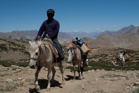 Ladakh Pakpaarden